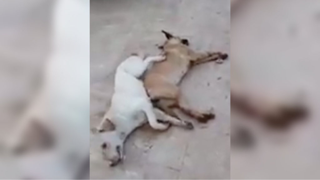 poison-stray-dogs-in-beirut-suburb-lebanon